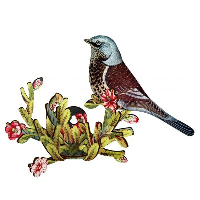 bird75