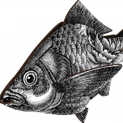 fishl404_a (1)
