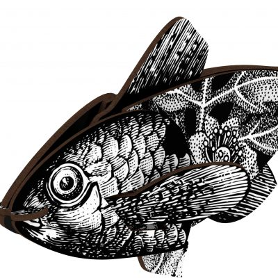 fishs417_a